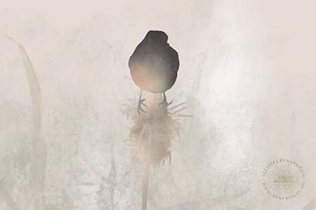A kóró és a kismadár - mese animáció